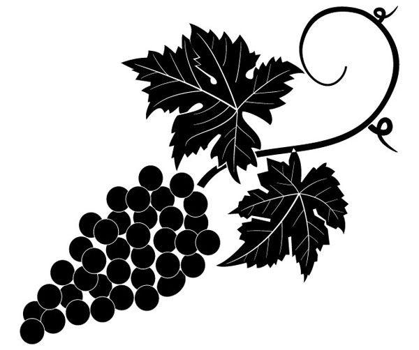 Grapevine Vector Image Free Vector Grape Vine Art