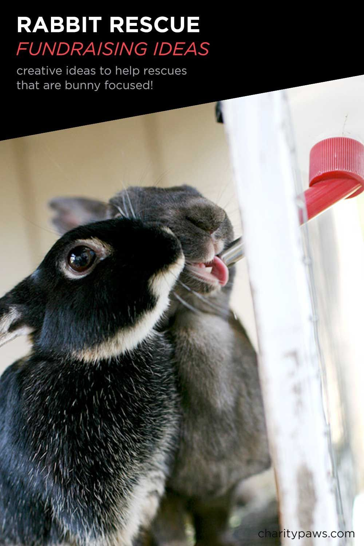 Because Rabbit Rescues Need Help Too! #animalrescue