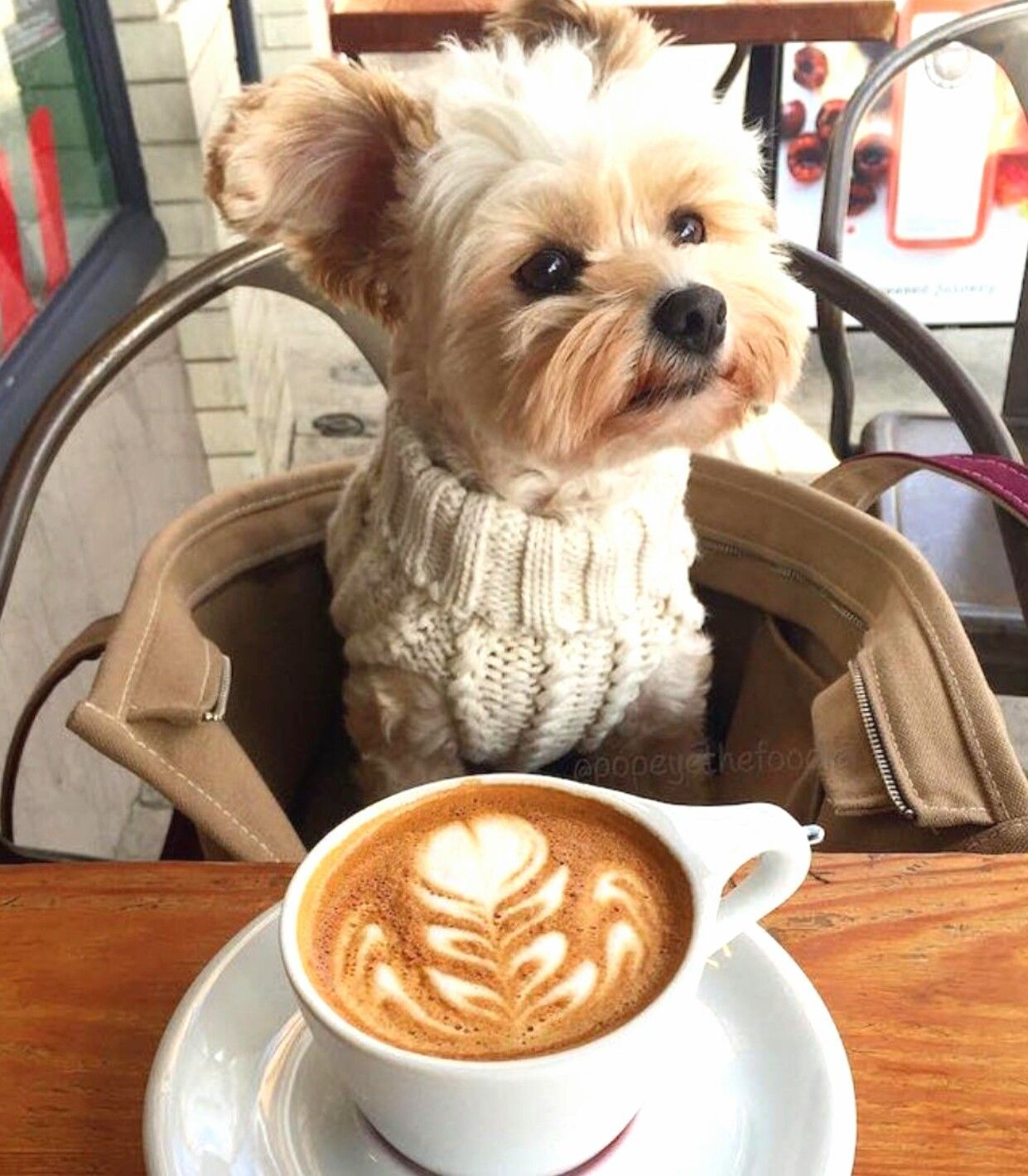 Pin by tami belanger on puppies Yorkshire terrier, Cute