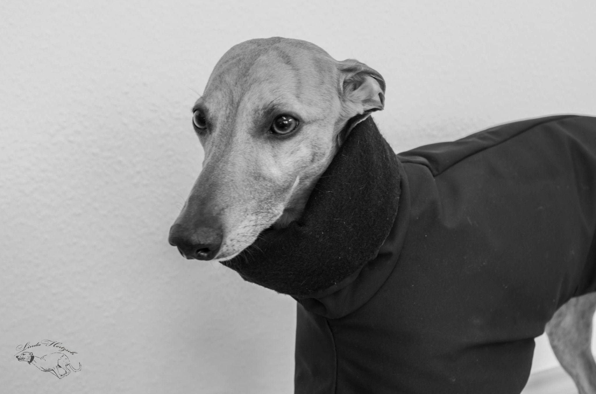 Unser erstes Mal | Einfache diy, Anleitungen und Hunde