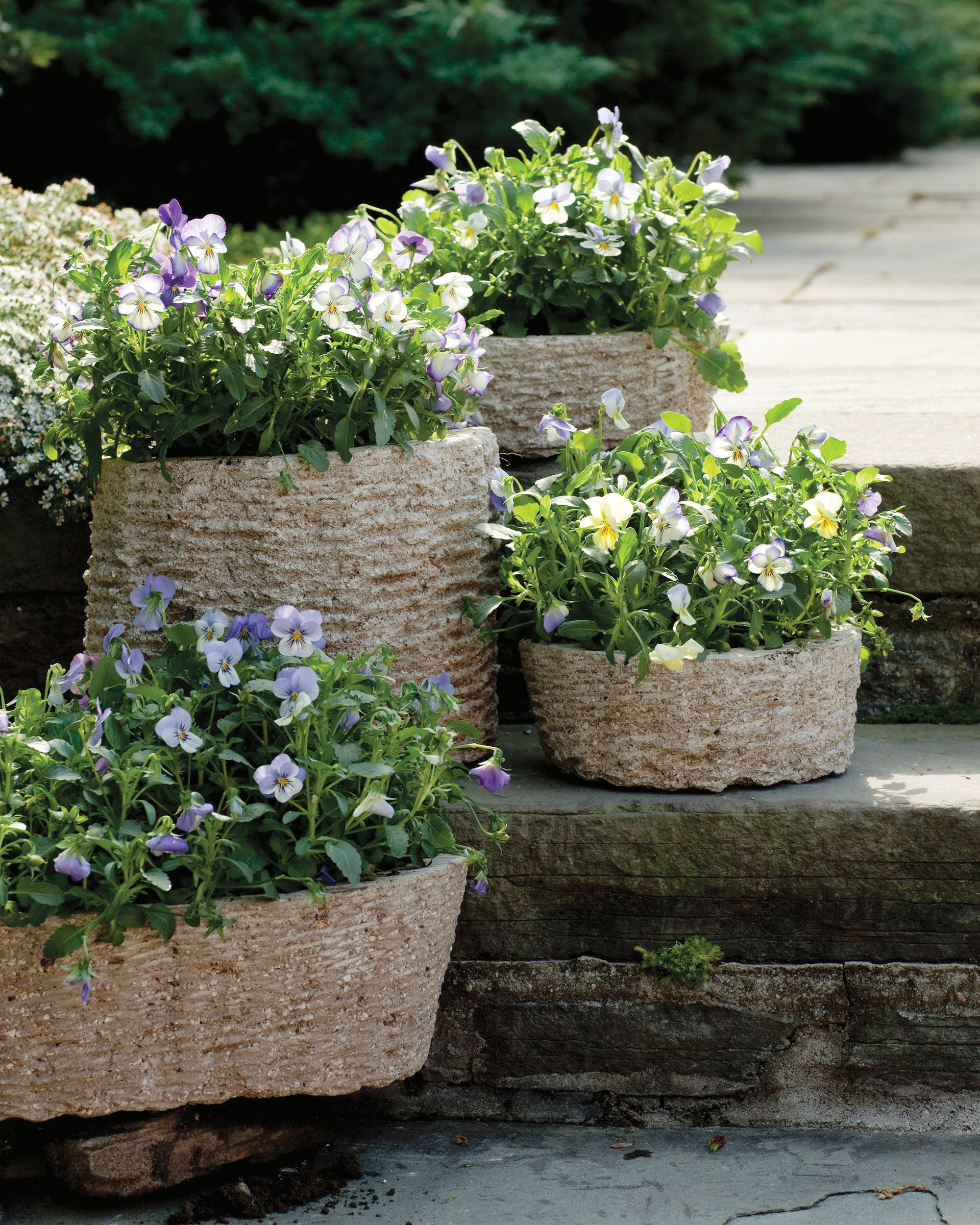 Decorative Flowerpots and Planters | Terra cotta, Pansies and Gardens