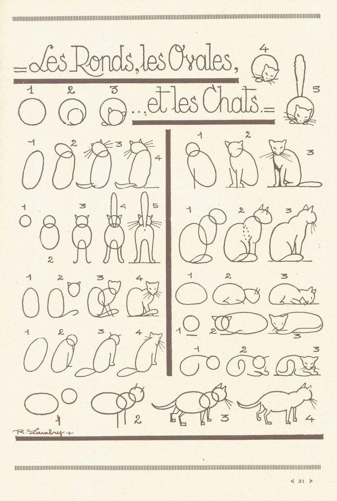 les animaux 14 | Anatomía, Anatomía animal y Secundaria
