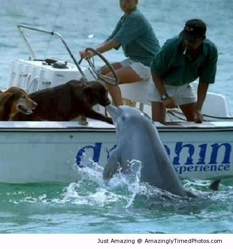 Dolphin gives dogs a close encounter
