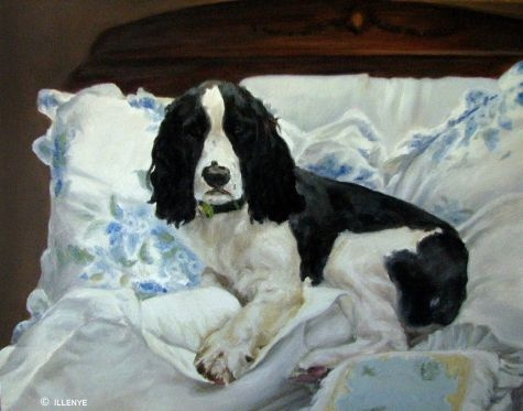 Dog Portrait In Oil Black English Springer Spaniel Victorian Bed Blue Floral Sheets By Artist Jeanne Illenye On Dailypainters Com With Images English Springer Spaniel Springer Spaniel Dog Portraits