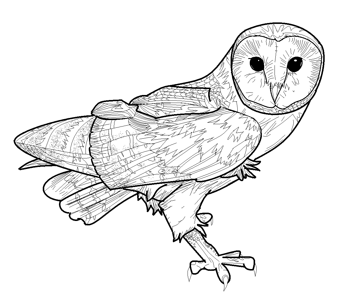 Barn owl coloring pages - Coloring Pages & Pictures ...