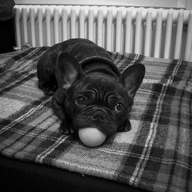 got my ball ball ball...