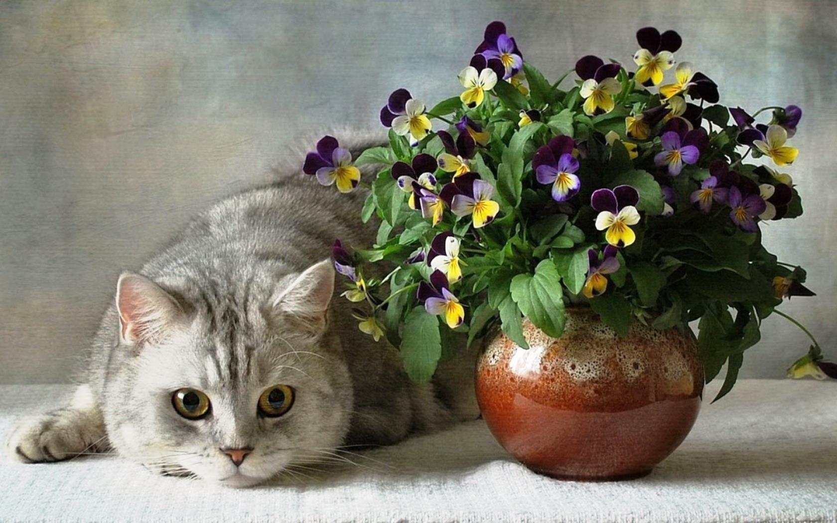 Картинка котенка в цветах все вредности переделал