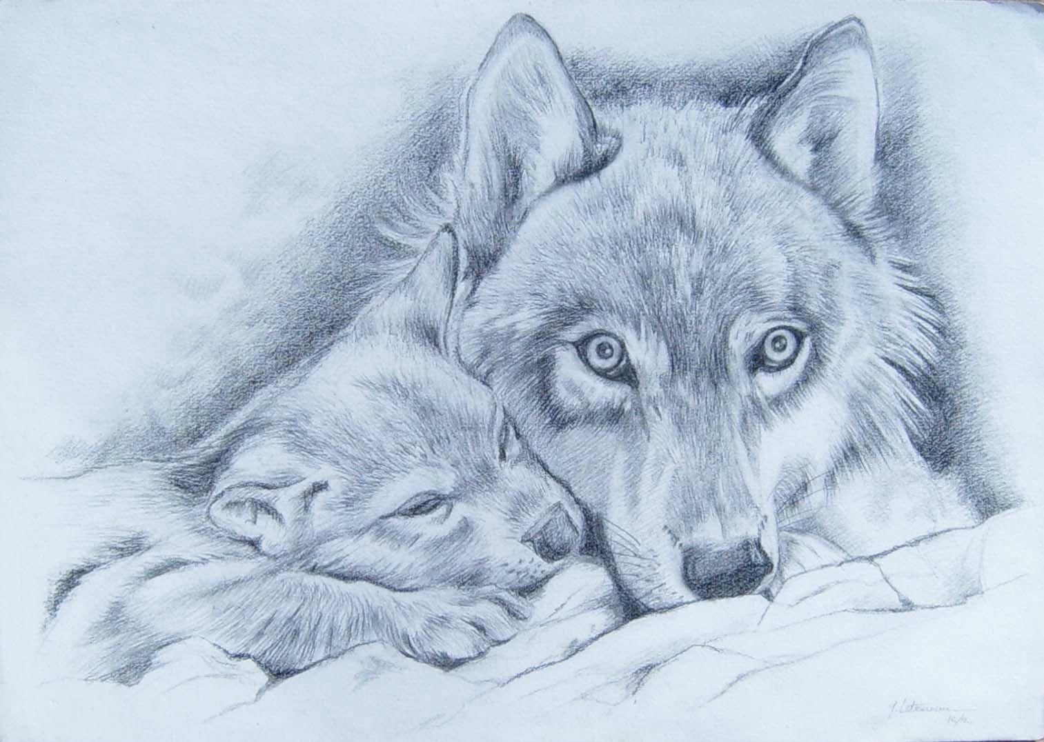 Louve et louveteau dessin grand pr dateur famille canid s ghislaine letourneur loup gris - Image de loup a imprimer ...