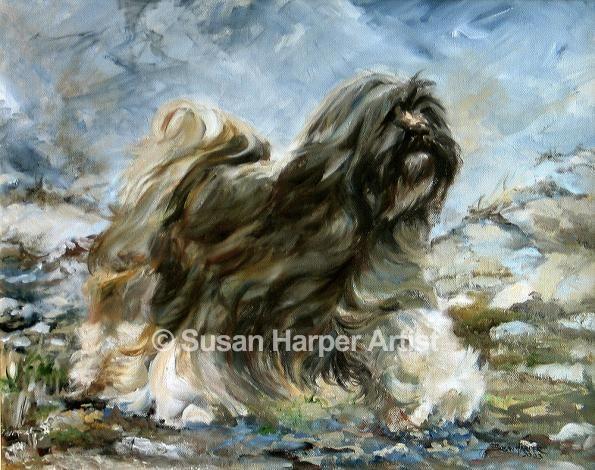 Web Tibetan Terrier 5 With Images Tibetan Terrier Terrier Dogs Terrier