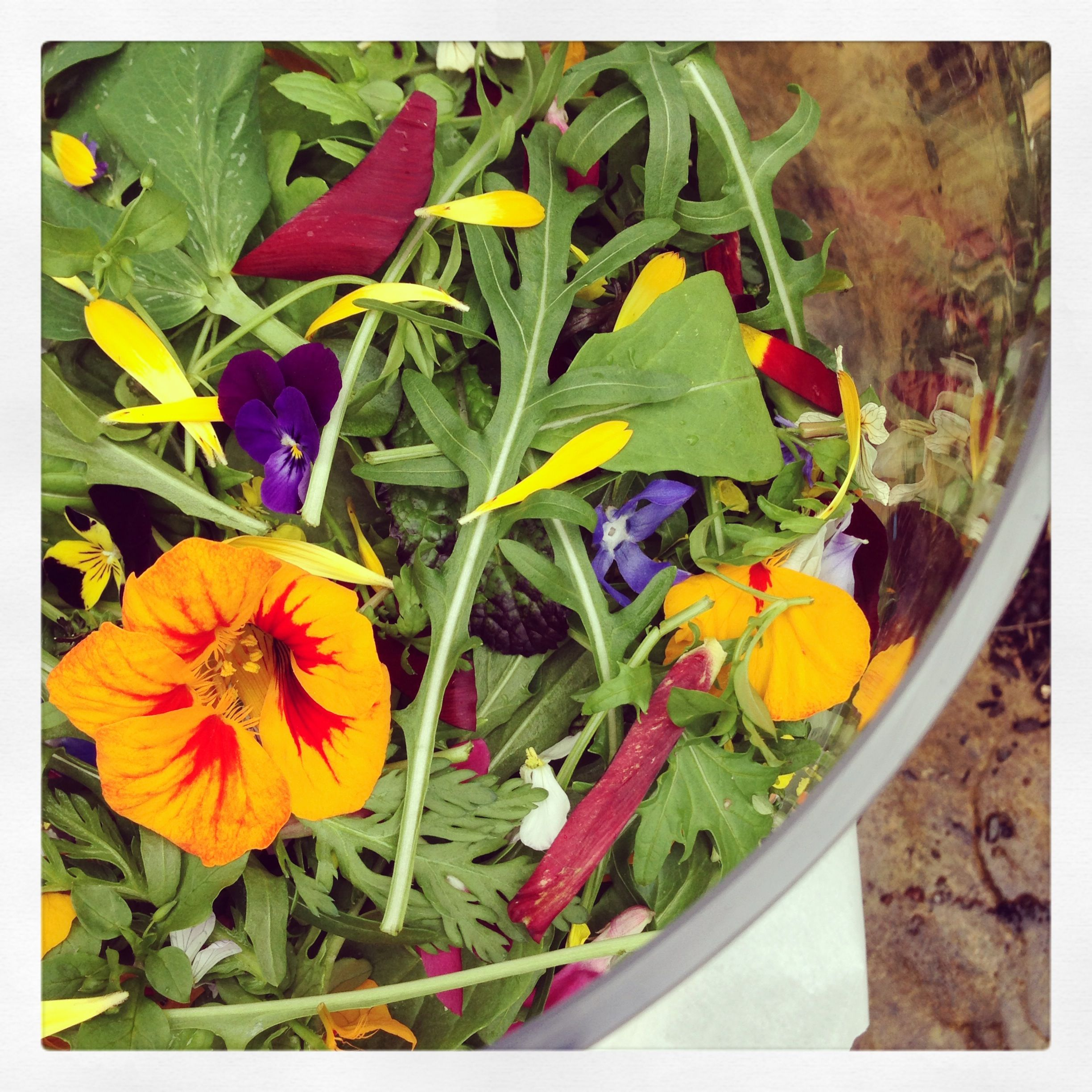 Spring Salad With Edible Flowers Including Tulip Petals Spring Salad Edible Flowers Edible