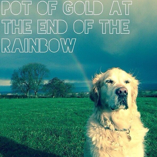 When The Very First Golden Retriever Died She Crossed The Rainbow