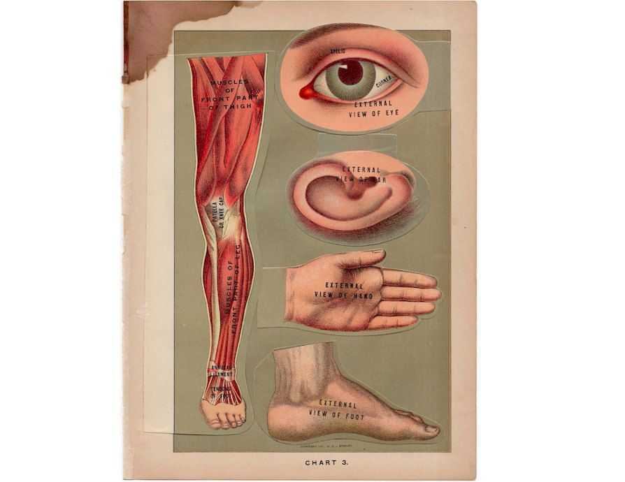 c. 1901 BODY PARTS ANATOMY - interactive 3D medical lithograph ...