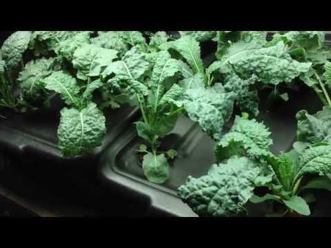 best plants for indoor hydroponics