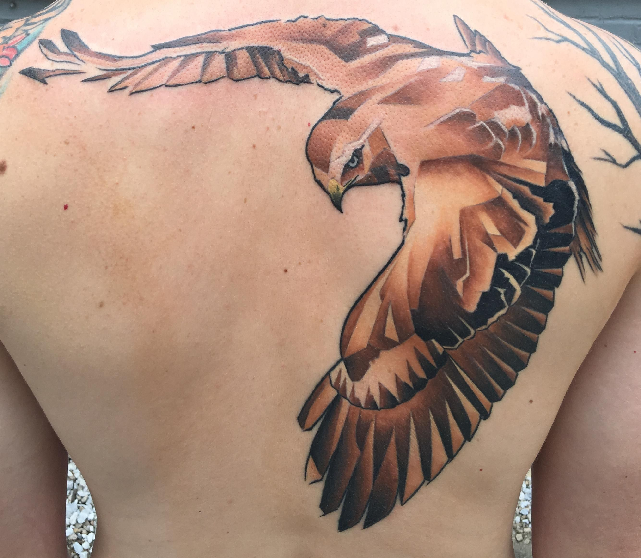 Red tailed hawk by marc nelson colt 39 s timeless tattoos for Tattoo madison wi