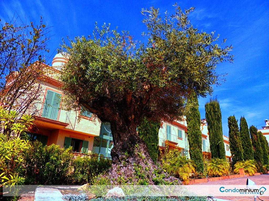 Community of Owners benahavís 1 -Condolex.es -condominiumservices.es