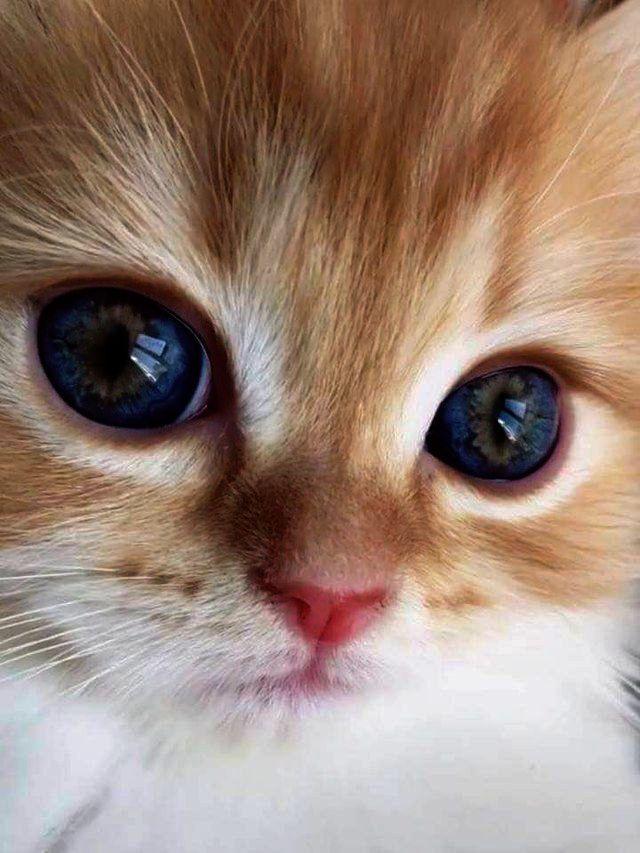 Cute Animals Desktop Wallpaper Funny Cute Kittens Memes Than Cute Cats And Dogs Youtube Baby Katzen Lustige Susse Katzen
