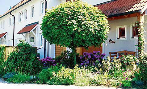 baum umpflanzen | umpflanzen, rasenpflege und der baum, Garten ideen