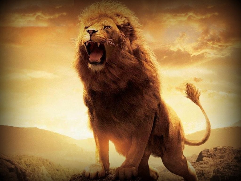 lion hd wallpapers lion hd pictures free download hd | hd wallpapers