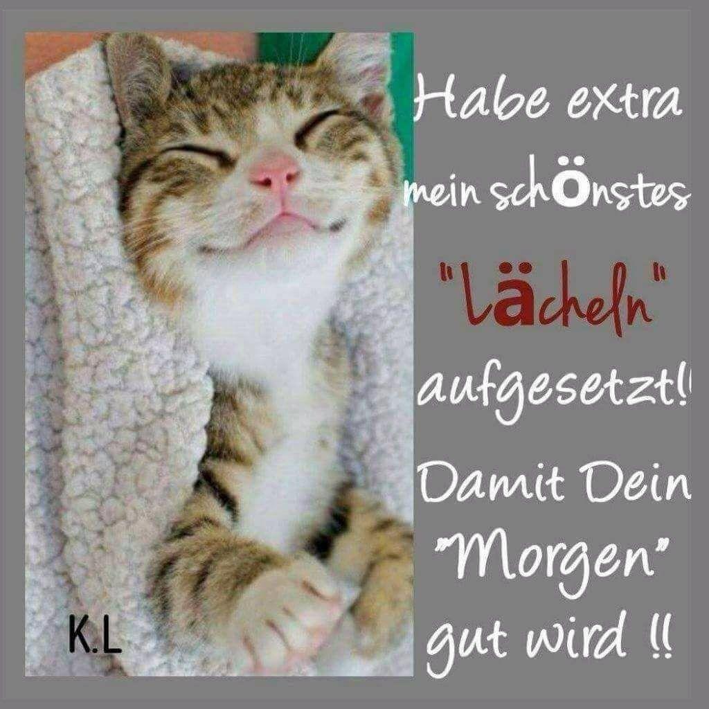 Pin Von Bahahn Auf Katze Lustige Guten Morgen Grüße