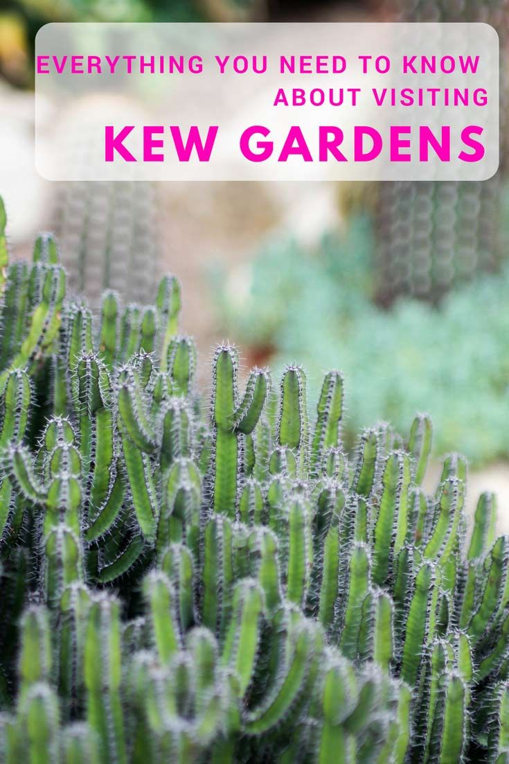 Everything You Need To Know About Visiting Kew Gardens In London
