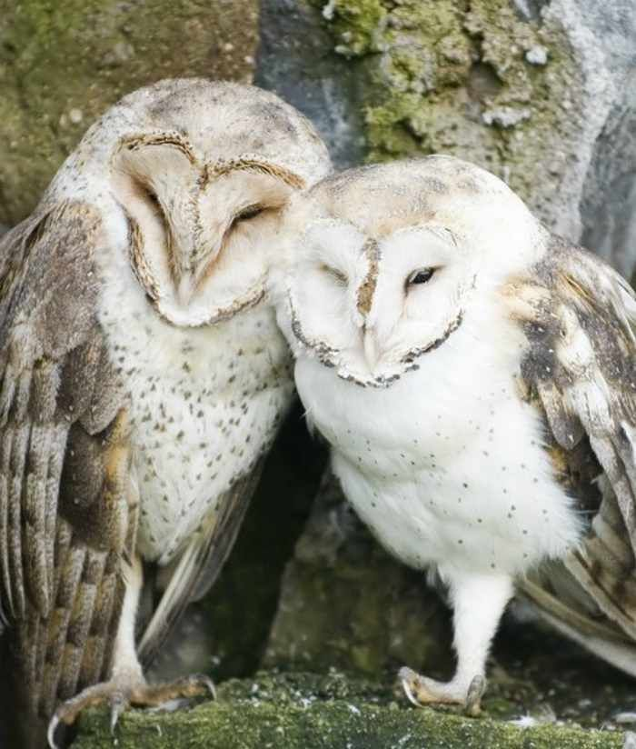 40 #Animal Couples That Are So In Love #humor