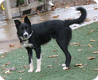 Corning Ca Border Collie Mix Meet Buster A Dog For Adoption Border Collie Dog Adoption Border Collie Mix