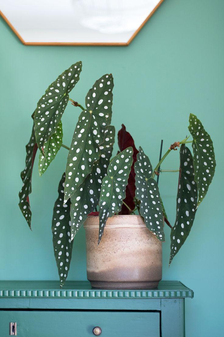 Photo of Einzigartige und Kreative ★ Dekorieren Sie Ihr Zimmer mit Pflanzen. # Inspiration # Pflanzenk…