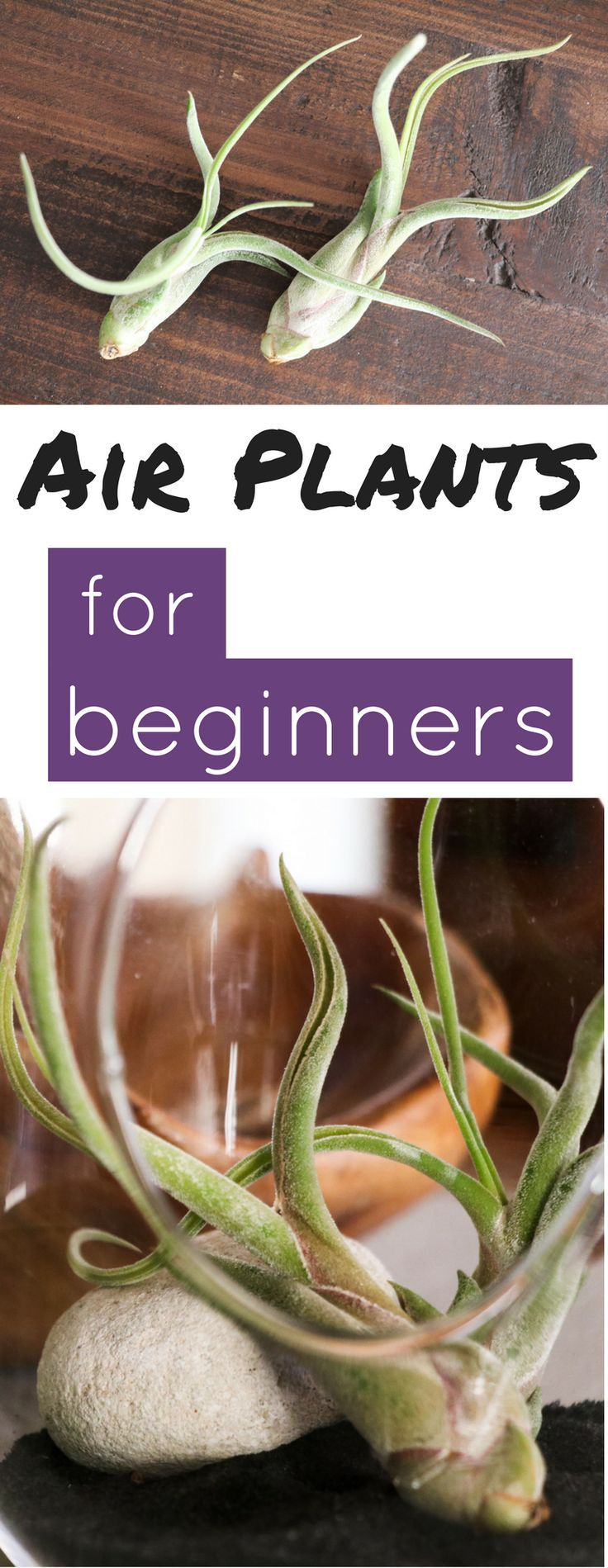 The easiest plants to care for and the perfect beginner houseplant