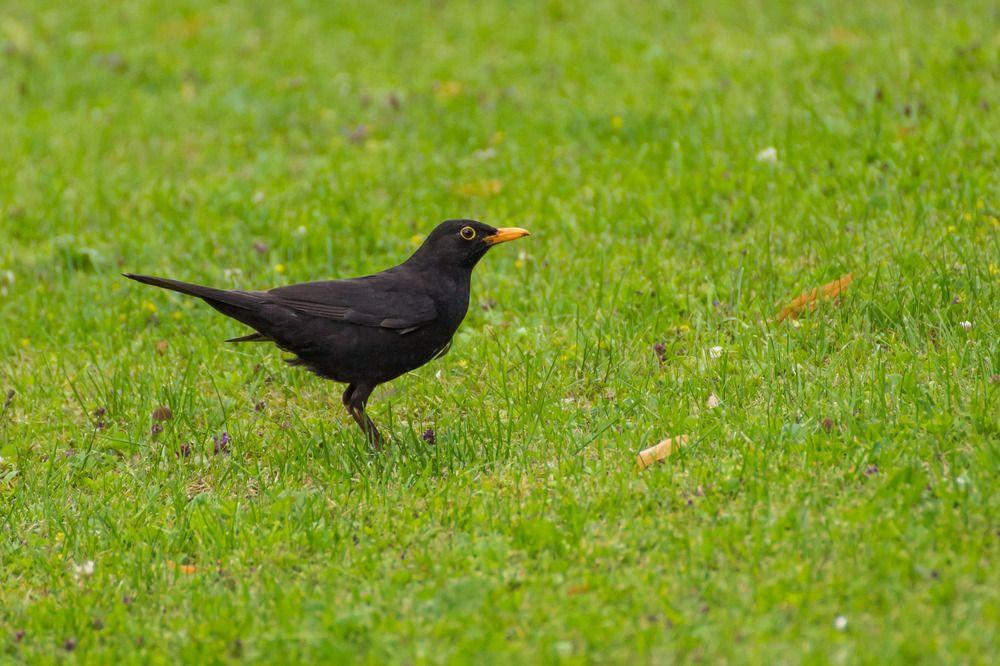 Pin Von Sky Auf Birds Tiere Wild Vogel Im Garten Tiere