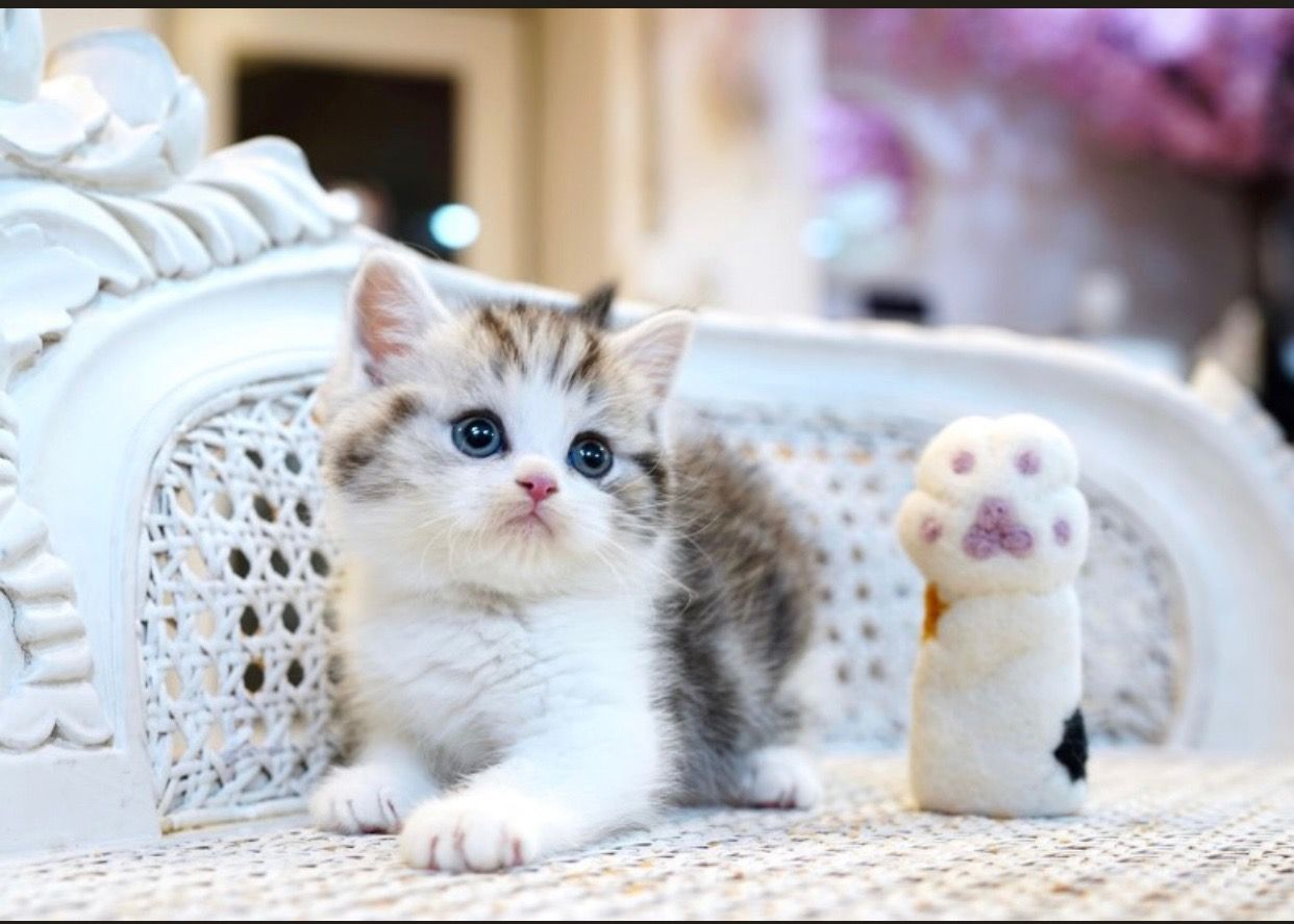 Our guide runs you through how to rehome or adopt a cat or