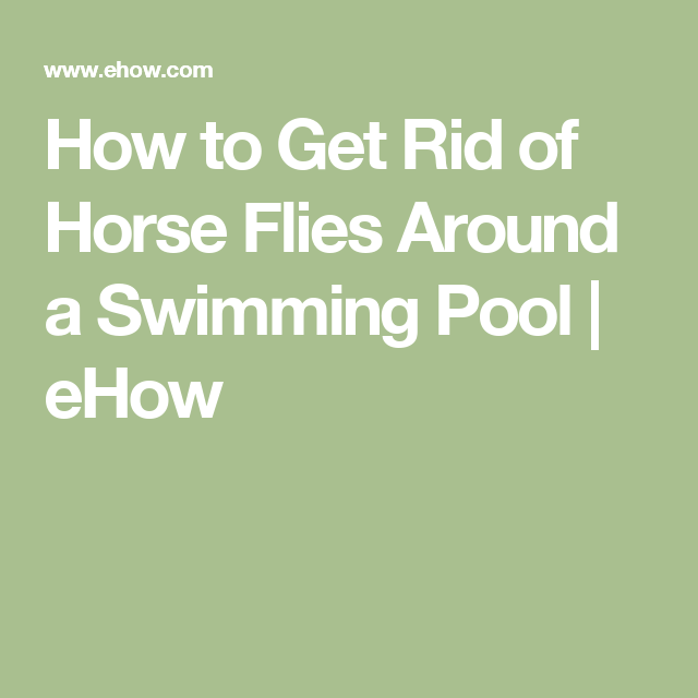 How to Get Rid of Horse Flies Around a Swimming Pool ...