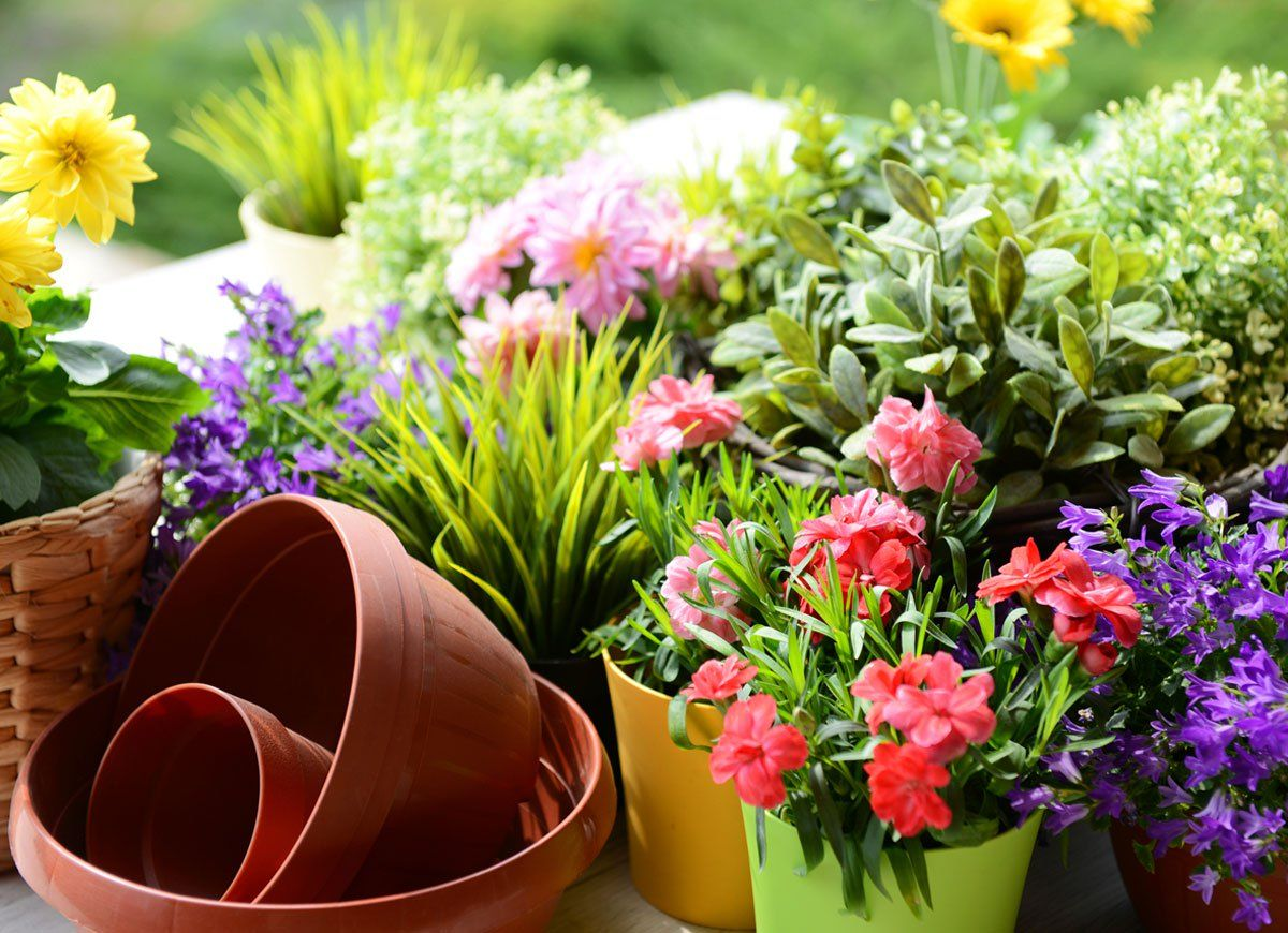 Image result for well-maintained indoor garden images