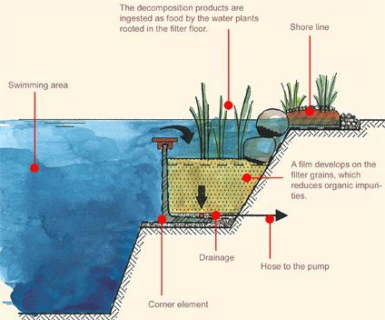 What You Need To Know About Natural Swimming Pools Hinterhof