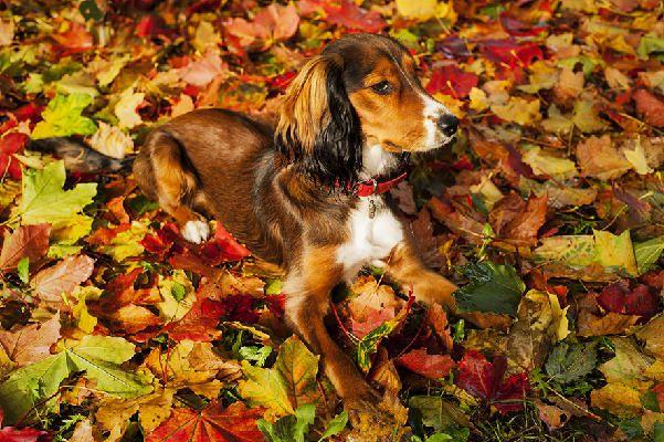 Pixel my dog !