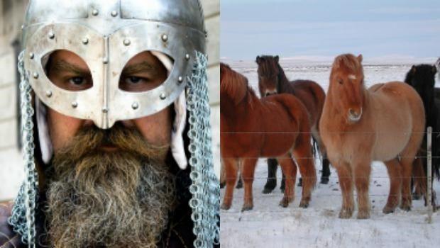 """Los vikingos """"enseñaron"""" una nueva forma de caminar a los caballos durante la Edad Media"""