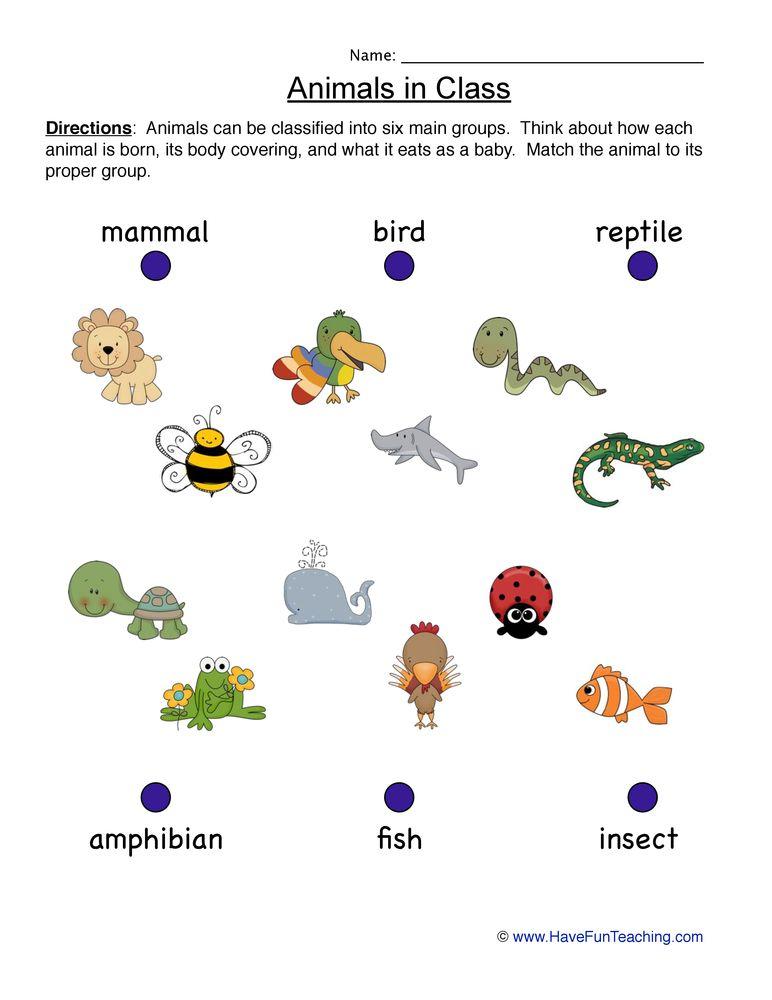 animals worksheet classification animal worksheets animal classification worksheet. Black Bedroom Furniture Sets. Home Design Ideas