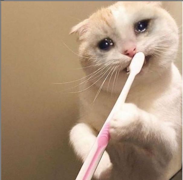 Pin en Sad cat meme