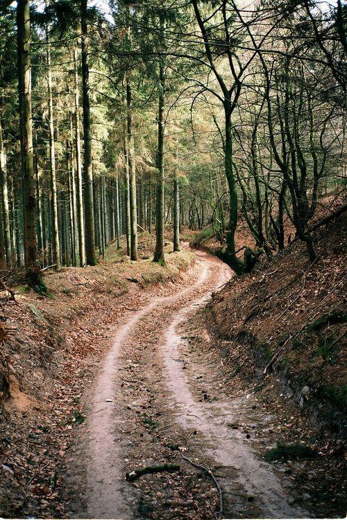 four wheeling trails <3