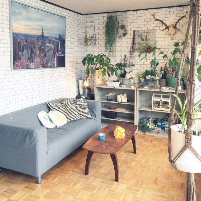 yukkkittyさんの、部屋全体,DIY,一人暮らし,flower,フラワー,ウンベラータ,クロス,鹿の角,girls…