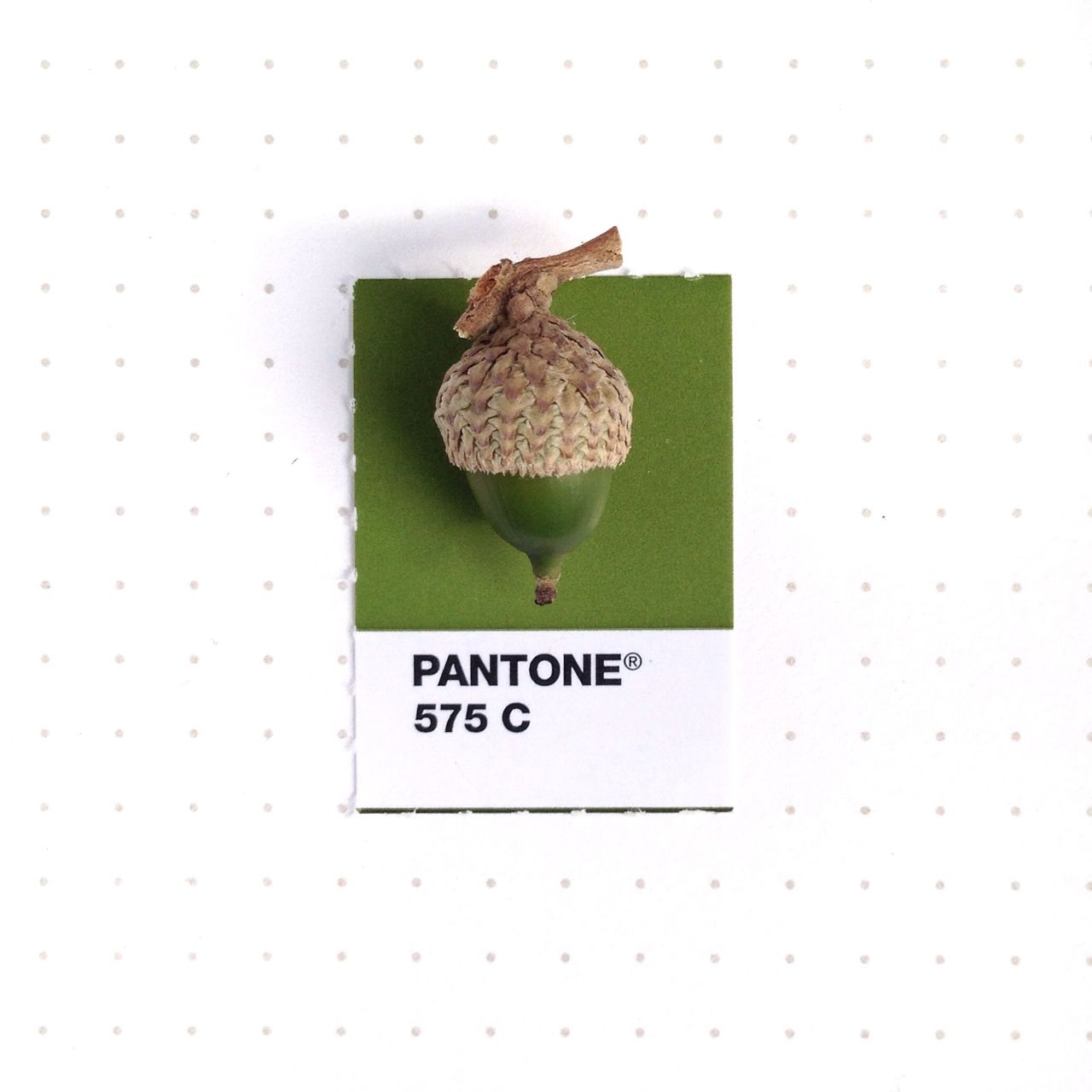 Pantone 575 color match. Baby acorn! My two oak trees are bearing ...