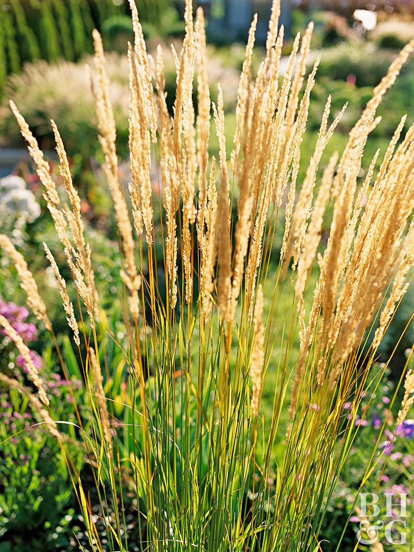 21 Of The Best Ornamental Grasses To Add Unbeatable Texture To Your Garden Ornamental Grasses Planting Flowers Best Perennials