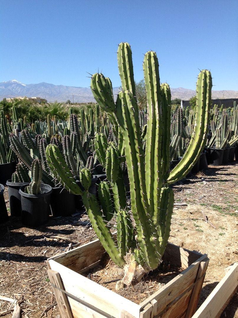 Gdnc Cactus And Desert Plant Nursery Hot Springs Ca Serving Coachella Valley