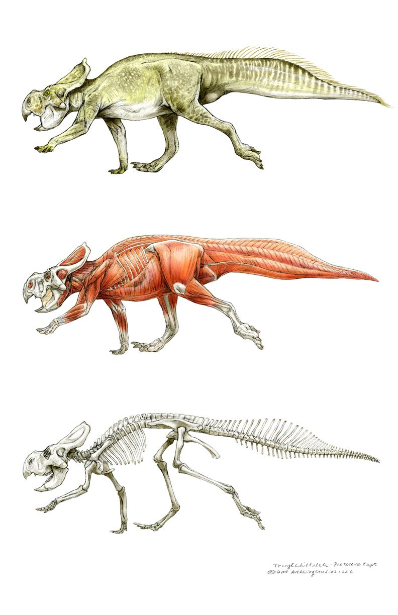 Protoceratops, Muddy Colors: The Art of Terryl Whitlatch | Favorite ...