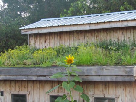 chicken coop with a living roof  http://theblondegardener.com/2015/08/01/chicken-coop-with-living-roof/
