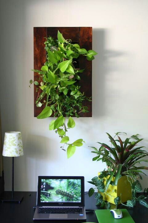 Wallhanging plant feature in a workspace from The Personal Garden Coach FB page.
