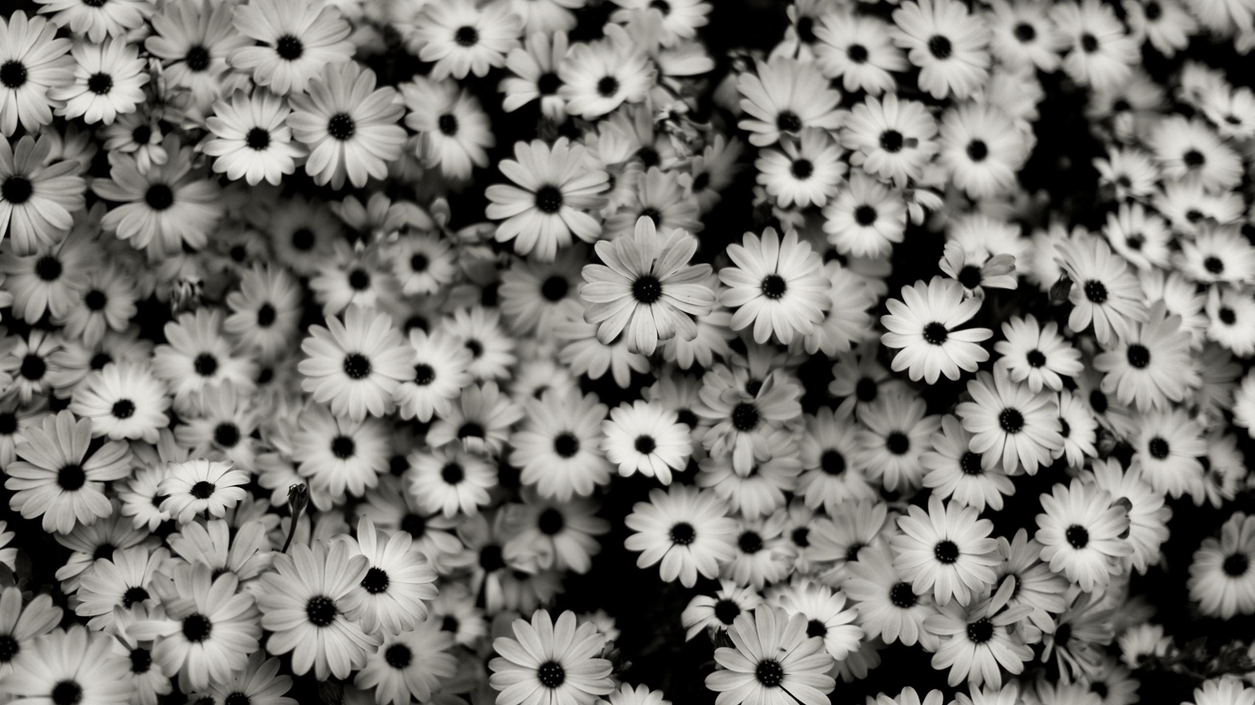 Black And White Vintage Flowers Tumblr 83202 Pixzone Wallpapers