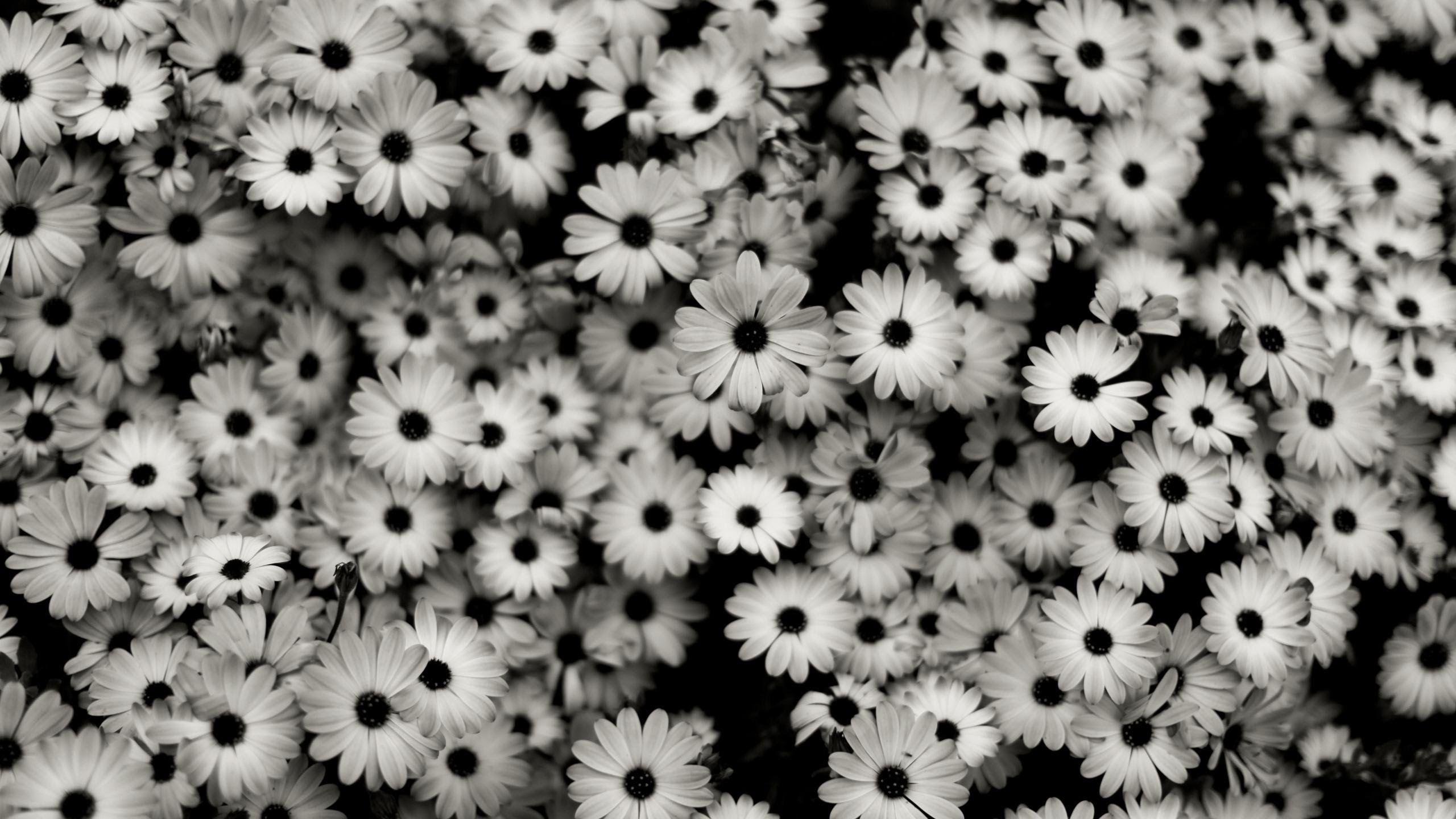 blackandwhitevintageflowerstumblr83202pixzone