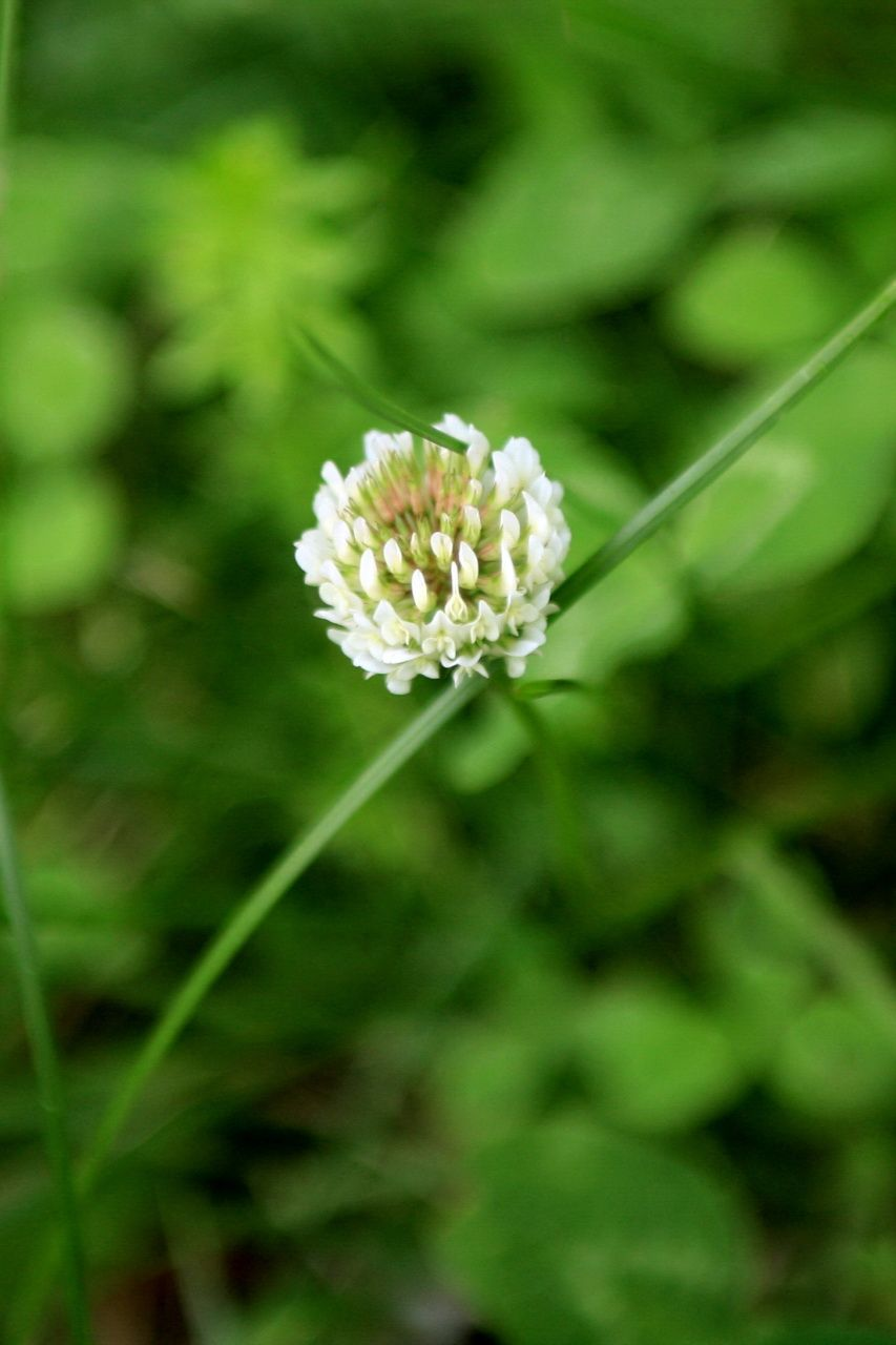 Identify lawn weeds learn about common weeds lawn weeds lawn identify lawn weeds learn about common weeds mightylinksfo Choice Image