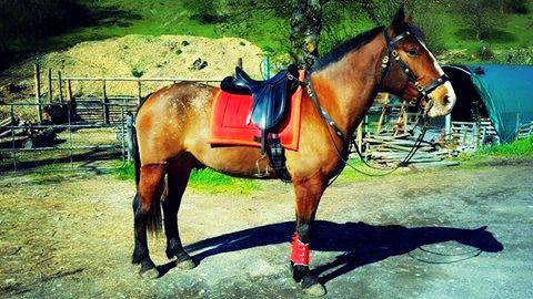 Tapis Darsky Taille Dressage Tissus Coton Rouge Double Cordelette