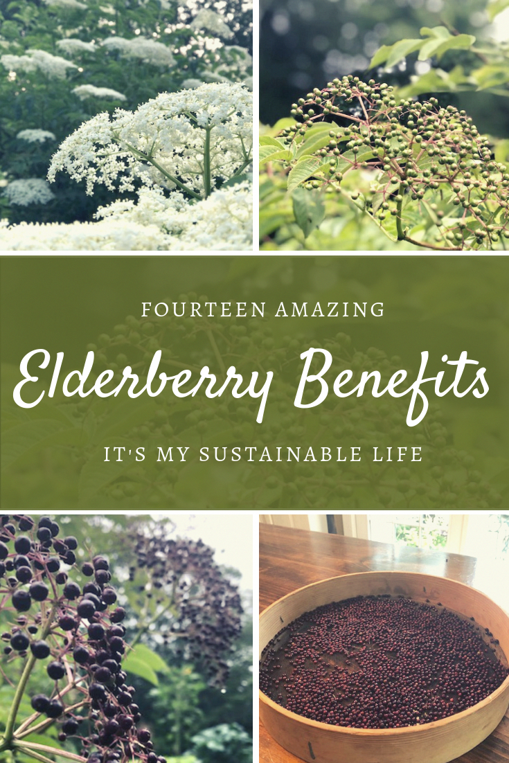 Fantastic Health Tips Tips Are Readily Available On Our Website Take A Look And You Will Not Be Sorry In 2020 Elderberry Benefits Natural Healing Remedies Elderberry